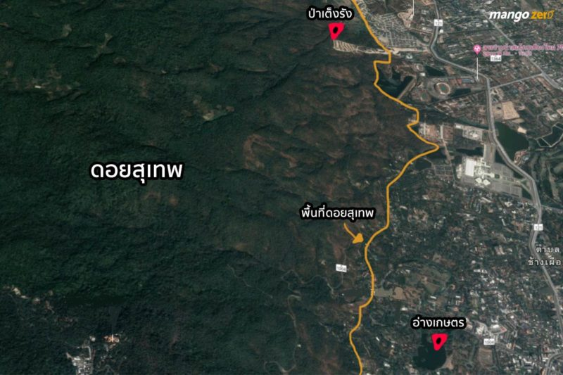 summary-doi-suthep-clear-cutting-project-3