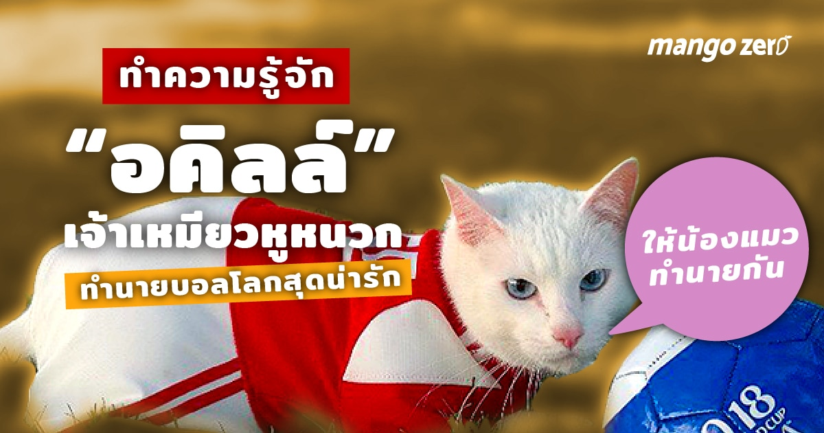 Achilles-the-cat-predicts-2018-Confederation-Cup-results