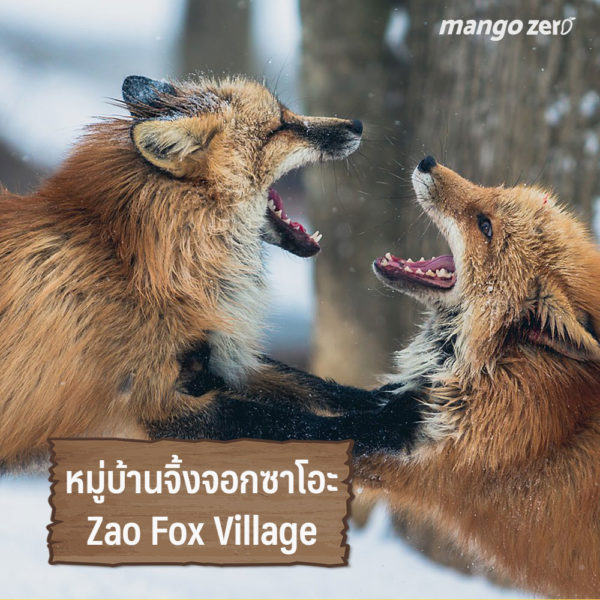 animal-lover-japan-04