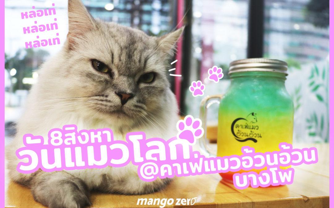 เล่นกับแมว วันแมวโลก ที่คาเฟ่แมว อ้วนอ้วน บางโพ