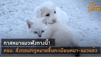 ทาสหมาแมวฟังทางนี้! ครม. สั่งถอนกฎหมายขึ้นทะเบียนหมา-แมวแล้ว