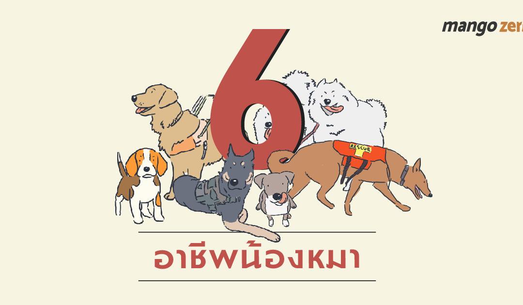 6 อาชีพน้องหมา เพื่อนรักสี่ขาแสนรู้