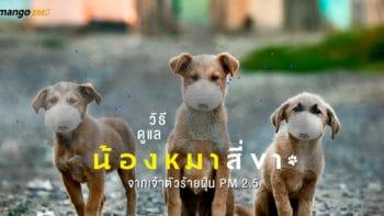 วิธีดูแลน้องหมาสี่ขา จากเจ้าตัวร้ายฝุ่น PM 2.5