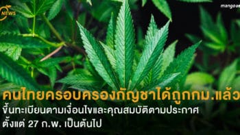 ราชกิจจาฯ ออกประกาศ คนไทยครอบครองกัญชาได้ถูกกม.แล้ว ขึ้นทะเบียนตามเงื่อนไขและคุณสมบัติตามประกาศ 27 ก.พ. เป็นต้นไป