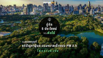 รู้จัก 5 ประโยชน์ของต้นไม้ กับสรรพคุณที่แก้ปัญหาฝุ่นละอองขนาดเล็กแบบ PM 2.5 ได้อย่างยั่งยืน
