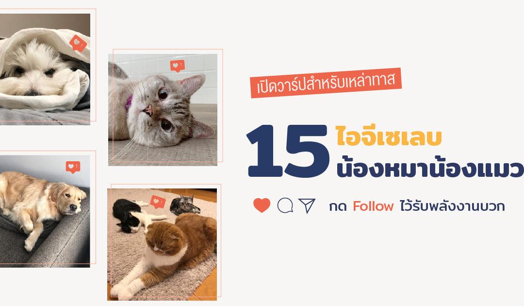 เปิดวาร์ปสำหรับเหล่าทาส 15 ไอจีเซเลบน้องหมาน้องแมว กด Follow ไว้รับพลังงานบวก
