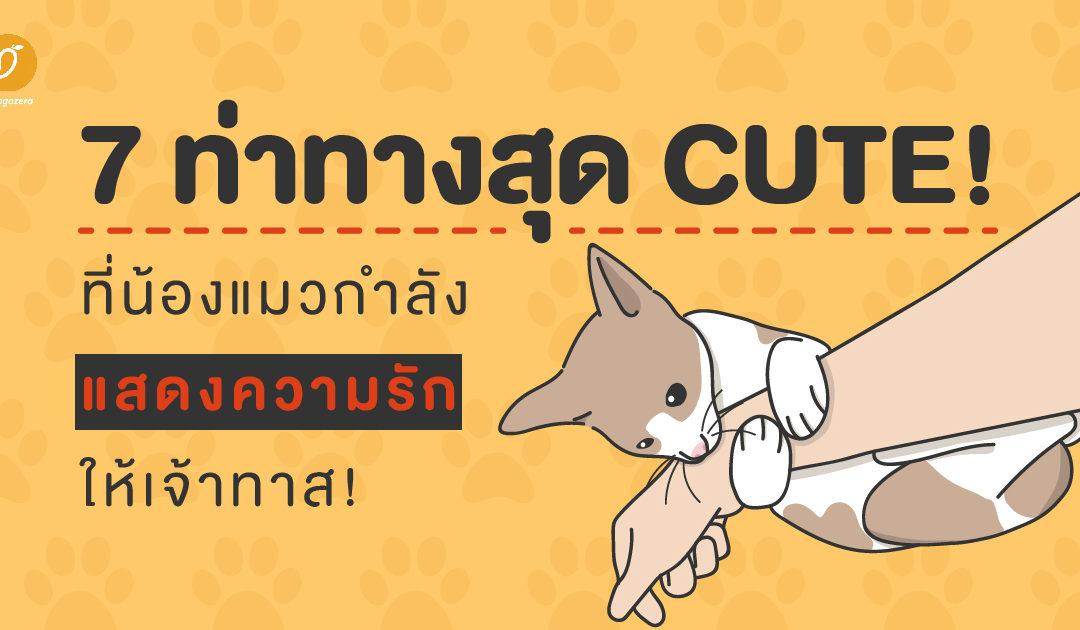 จับสังเกต 7 ท่าทางสุด Cute! ที่น้องแมวกำลังแสดงความรักให้คุณ!