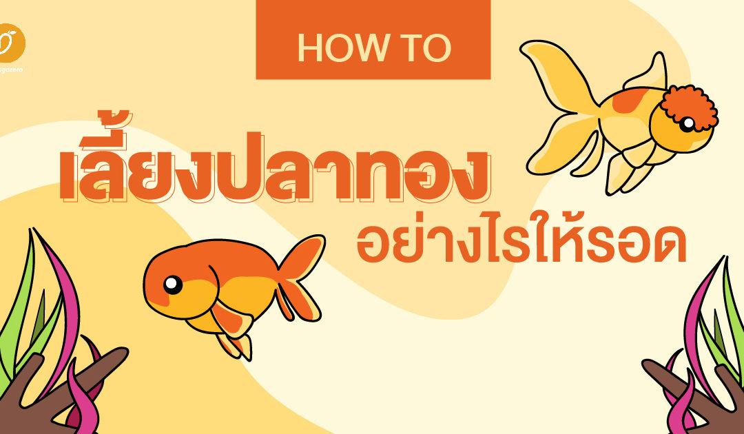 How to เลี้ยงปลาทองอย่างไรให้รอด