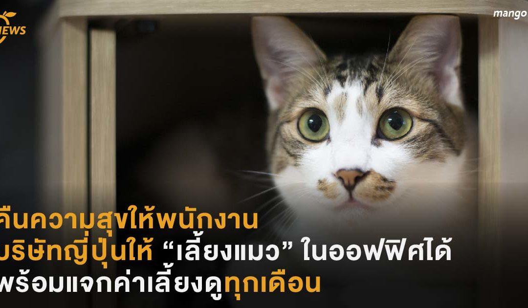 """คืนความสุขให้พนักงาน บริษัทญี่ปุ่นให้ """"เลี้ยงแมว"""" ในออฟฟิศได้  พร้อมค่าเลี้ยงดูทุกเดือน"""