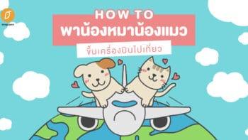 how to พาน้องหมาน้องแมวขึ้นเครื่องบินไปเที่ยว