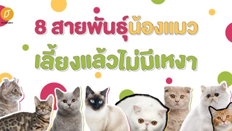 8 สายพันธุ์น้องแมว เลี้ยงแล้วไม่มีเหงา