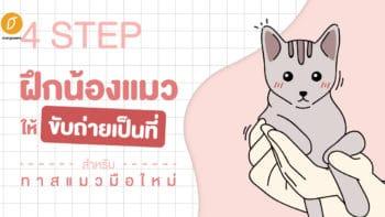 4 Step ฝึกน้องแมวให้ขับถ่ายเป็นที่ สำหรับทาสแมวมือใหม่