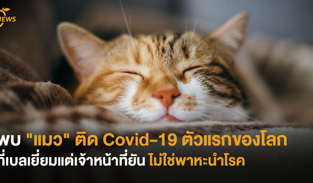 """พบ """"แมว"""" ติด Covid-19 ตัวแรกของโลก ที่เบลเยี่ยม แต่เจ้าหน้าที่ยัน ไม่ใช่พาหะนำโรค"""