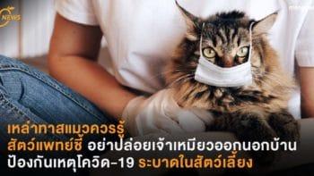 เหล่าทาสแมวควรรู้  สัตว์แพทย์ชี้ อย่าปล่อยเจ้าเหมียวออกนอกบ้าน ป้องกันเหตุโควิด-19 ระบาดในสัตว์เลี้ยง