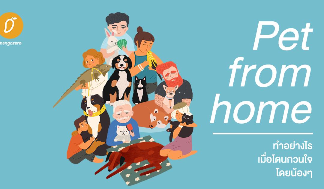 Pet from home – ทำอย่างไร เมื่อโดนกวนใจโดยน้องๆ