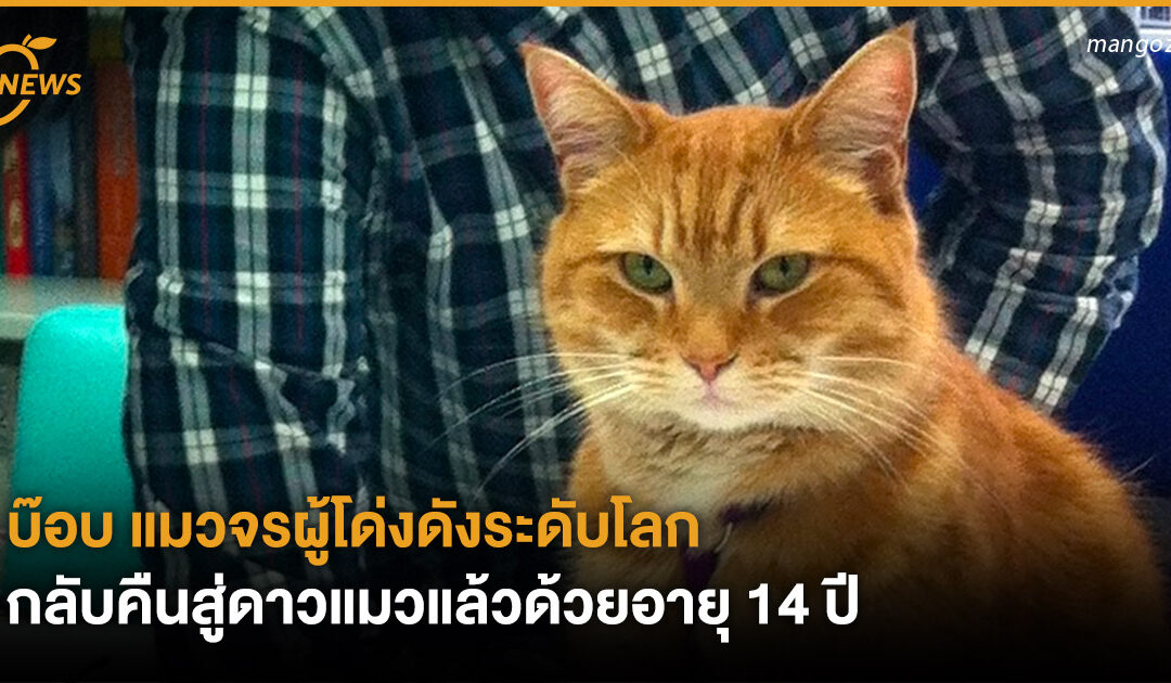 บ๊อบ แมวจรผู้โด่งดังระดับโลก กลับคืนสู่ดาวแมวแล้วด้วยอายุ 14 ปี