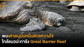 พบเต่าตนุนับหมื่นตัว แห่วางไข่ใกล้แนวปะการัง Great Barrier Reef