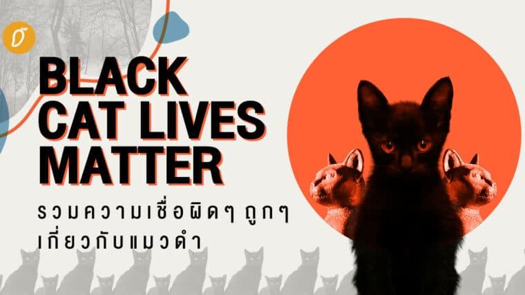 Black Cat Lives Matter รวมความเชื่อผิดๆ ถูกๆ เกี่ยวกับแมวดำ