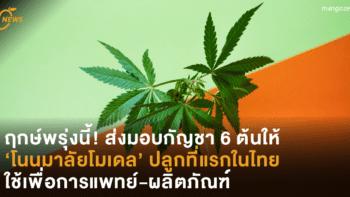 ฤกษ์พรุ่งนี้! ส่งมอบกัญชา 6 ต้นให้ 'โนนมาลัยโมเดล' ปลูกที่แรกในไทย ใช้เพื่อการแพทย์-ผลิตภัณฑ์