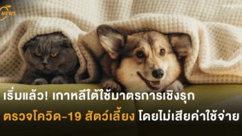 เริ่มแล้ว! เกาหลีใต้ใช้มาตรการเชิงรุก ตรวจโควิด-19 สัตว์เลี้ยงโดยไม่เสียค่าใช้จ่าย
