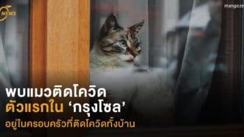 พบ 'แมว' ติดโควิด ตัวแรกใน 'กรุงโซล'  อยู่ในครอบครัวที่ติดโควิดทั้งบ้าน